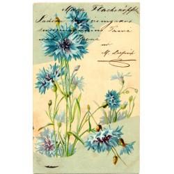 Vintage postcard 1905